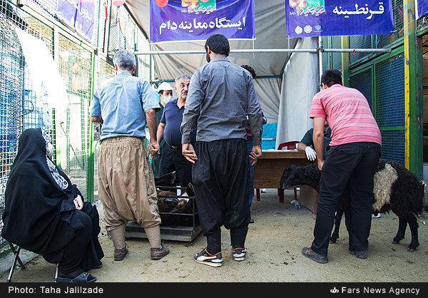 نظارت بر عرضه دام و ذبح شرعی در آذربایجان شرقی