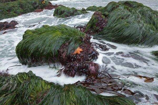 طرح پایلوت فراوری محصولات فناورانه از جلبک به زودی شروع می گردد
