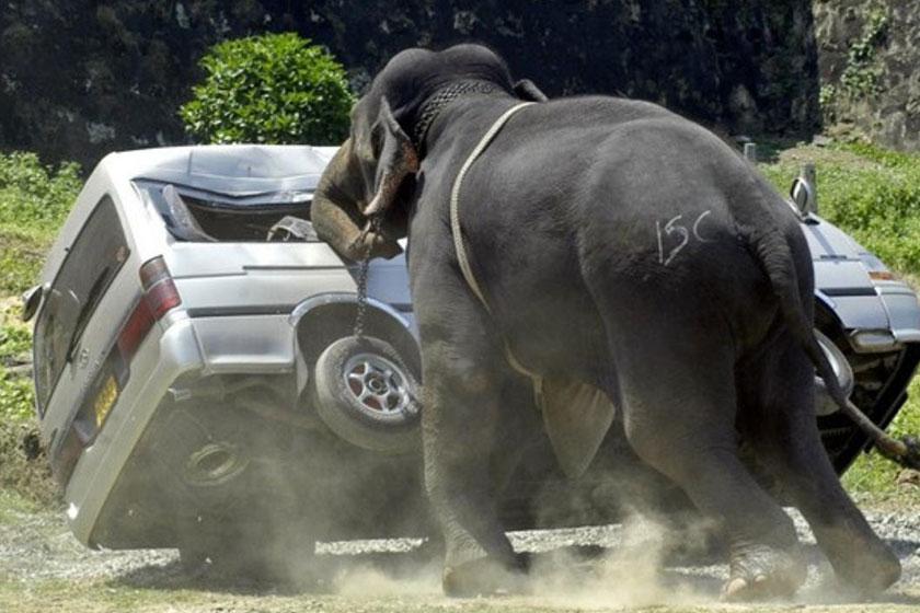 حمله فیل به زوج گردشگر ایرانی در تایلند