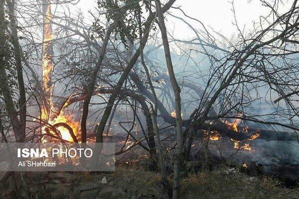 آتش سوزی 19 هکتاری باغات چای و مرکبات لنگرود